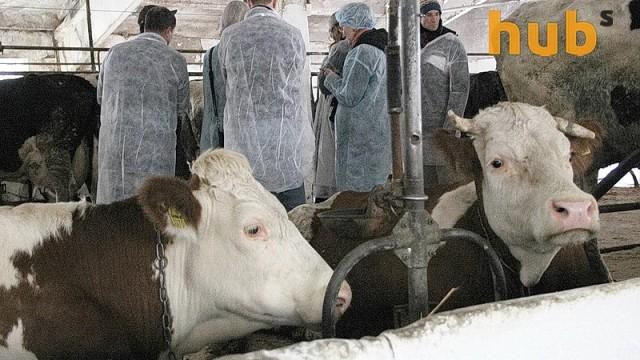 Чиновники отсрочили запрет на прием молока второго сорта