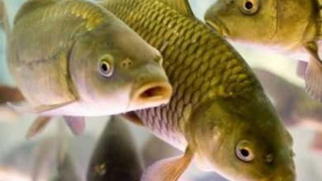 Раду просят профинансировать проект рыбного патруля