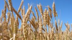 В Украине падает количество сельских хозяйств