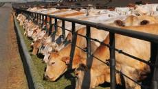 С нового года аграрии могут остаться без льгот по НДС