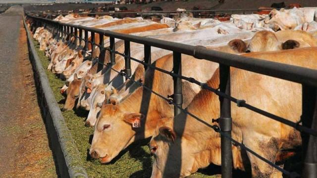 В Украине стали производить меньше продукции животноводства