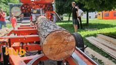 В Закарпатье конфискованы первые два вагона с экспортным лесом
