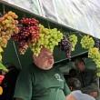 Депутаты поддержали развитие производства вин