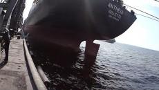 «Нибулон» обвиняют в загрязнении акватории Бугского лимана