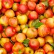 Экспорт украинских яблок в Евросоюз вырос в 350 раз