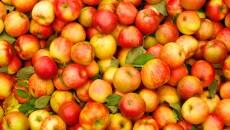 Украинские яблоки будут продаваться в Индии