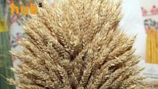 В Житомире утвердили программу поддержки аграриев