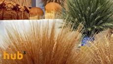 Кения хочет без пошлин импортировать украинское продовольствие