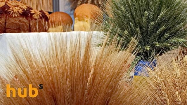 «Агропродсервис» готовится к уборке зерновых на Тернопольщине