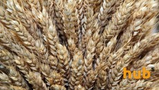 Экспорт зерна дорос до 4 млн грн