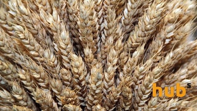 Аграрии намолотили 58 млн тонн зерновых и зернобобовых