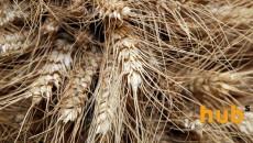 Украина поставила Китаю свыше 700 тыс. тонн зерновых