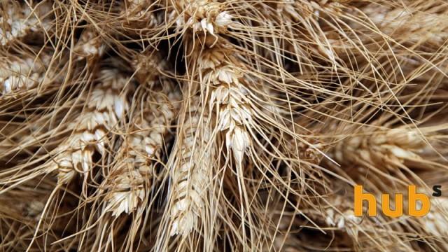 Снижение мировых цен на зерновые приостановилось