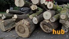 Незаконный оборот древесины в Украине достигает 5 млрд грн в год