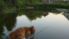 ВНовой Зеландии хотят запретить котов