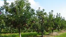 Аграрии Винничины выращивают 50% всех садовых площадей Украины