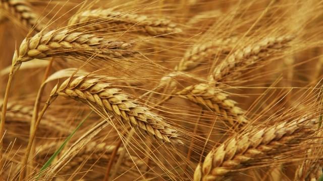 Тенденция к увеличению цен на зерновые может закрепиться на несколько лет