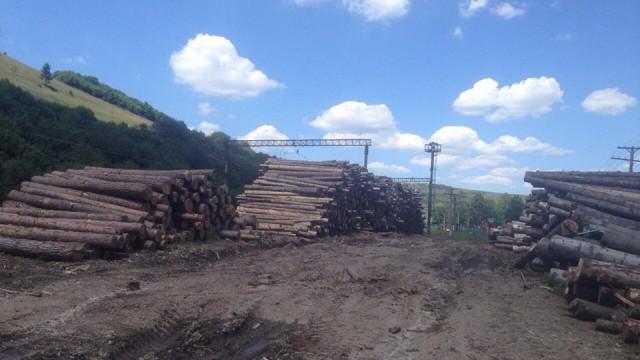 На Львовщине - массовые обыски лесхозов
