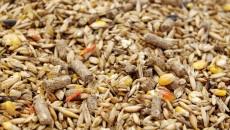 Рада приняла закон о безопасности кормов