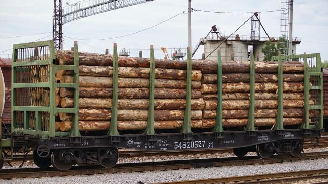На Закарпатье арестовали лес, предназначавшийся ЕС