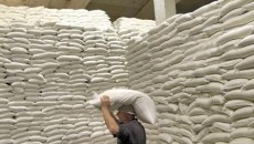 Украина на 25% нарастила экспорт сахара