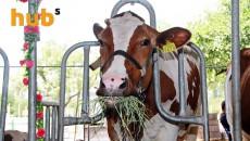 Украина сможет экспортировать говядину в Турцию