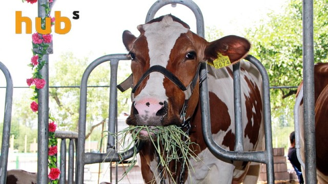 Отдельным животноводам подбросили свыше 260 млн грн помощи