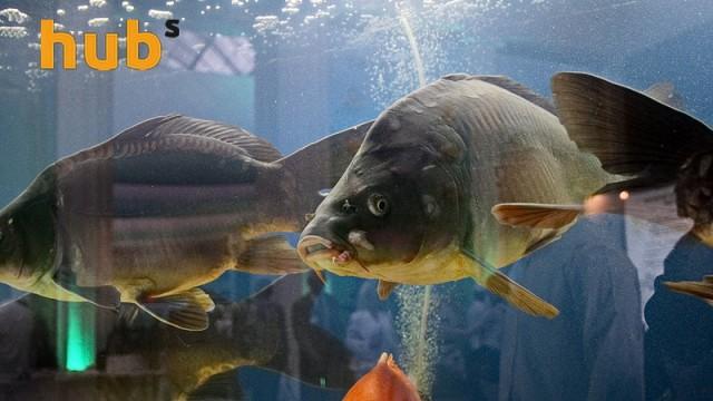Норвегия рекордно увеличила экспорт рыбы