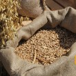 Украина нарастила запасы зерновых на 11%