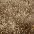 Экспорт зерновых упал почти на 1 млн тонн