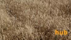 Экспорт зерновых перевалил за 40 млн тонн
