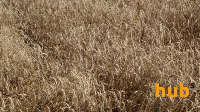 Производство зерна на Кировоградщине составило 1,7 млн тонн