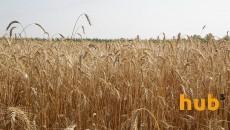 Аграрии намолотили свыше 51 млн тонн зерна