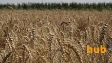 Экспорт зерновых достиг 35,6 млн тонн