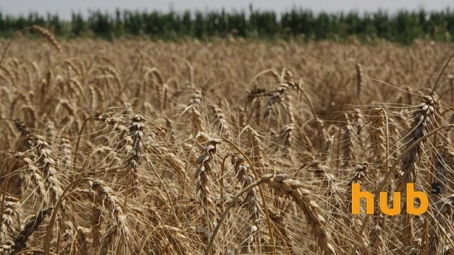 Урожай зерновых составил 57,5 млн тонн