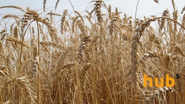 Объем экспорта зерновых упал на 10%