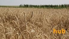 Экспорт зерновых на 20% больше, чем годом ранее, - Госслужба