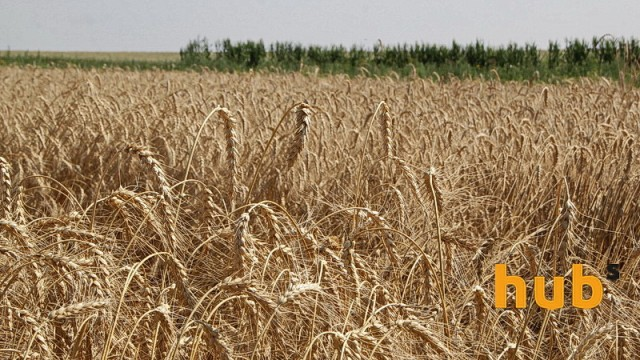 Украина экспортировала 14,1 млн тонн зерновых