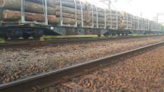 Суд на Закарпатье задержал 17 вагонов леса, следовавшего в Европу