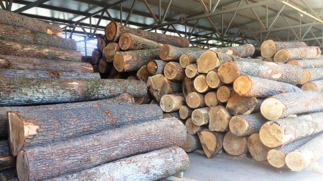 На Львовщине деревообрабатывающее предприятие запускает новую линию