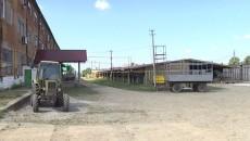 В Тернопольской области восстанавливают табачную отрасль
