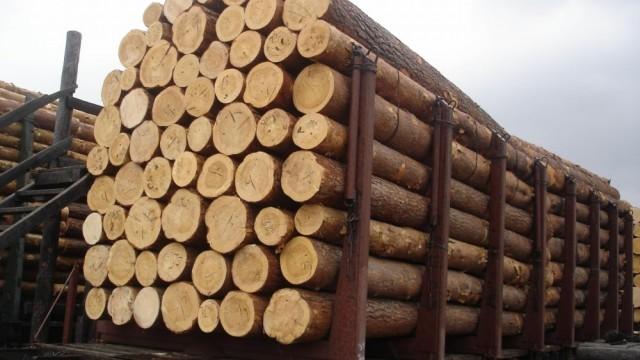 Треть государственных лесхозов находятся фактически без учета