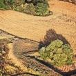 Госгеокадастр пустит с молотка очередные 2 тыс. гектаров госземель