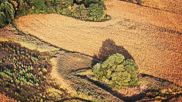 Госгеокадастр впервые применил СЕА на земельных торгах