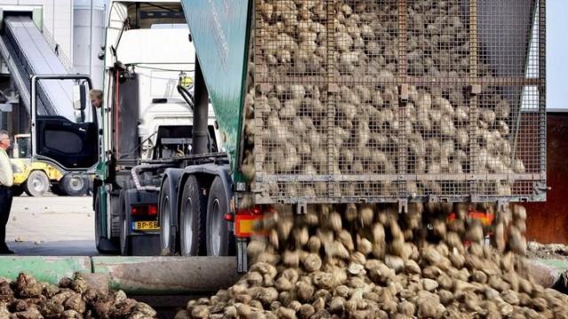 В Украине работают 32 сахарных завода