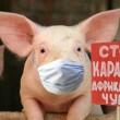 В Харьковской и Николаевской областях зафиксированы новые случаи АЧС