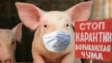 На Полтавщине у свиней нашли АЧС