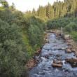 Парламент принял закон о национальной инвентаризации лесов