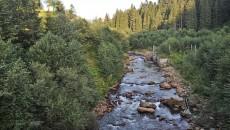 Лесхоз усовершенствует мониторинг вырубки лесов за деньги Всемирного банка