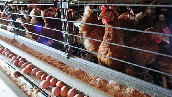 Ovostar Union нацелилась на покупку птицекомплекса в Польше